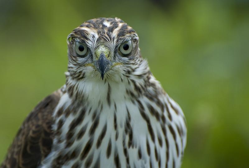 "фото ""Eye to Eye"" метки: природа, дикие животные"