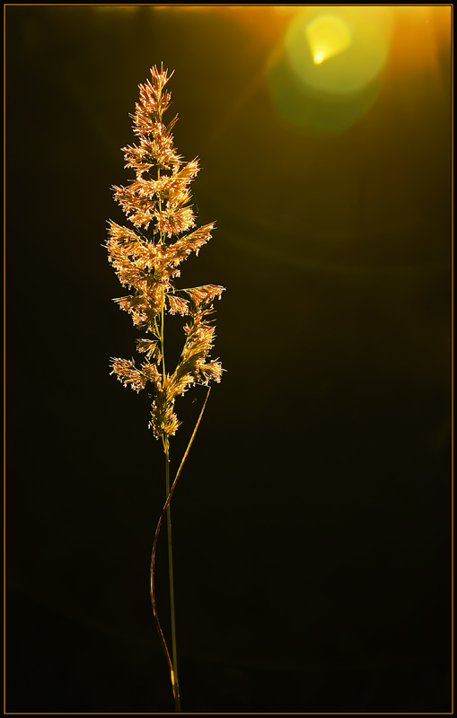 "photo ""The light"" tags: nature, flowers"