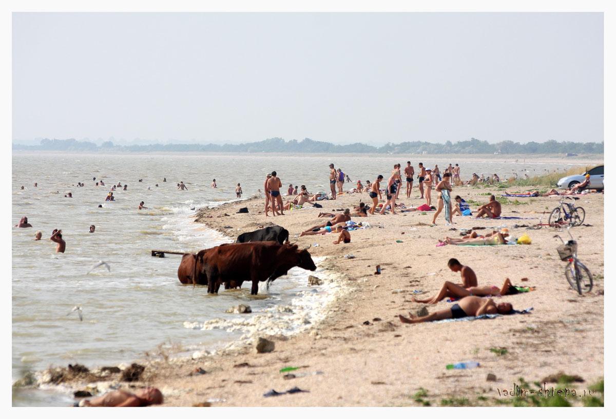 фиксирующей системы камышеватская фото пляжа кулинарии