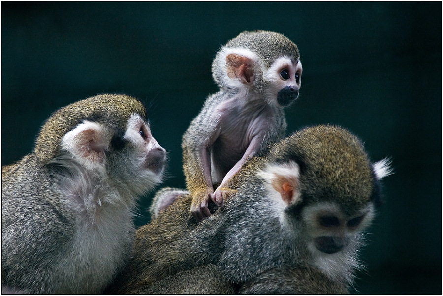 "photo ""Family pyramid"" tags: nature, genre, wild animals"