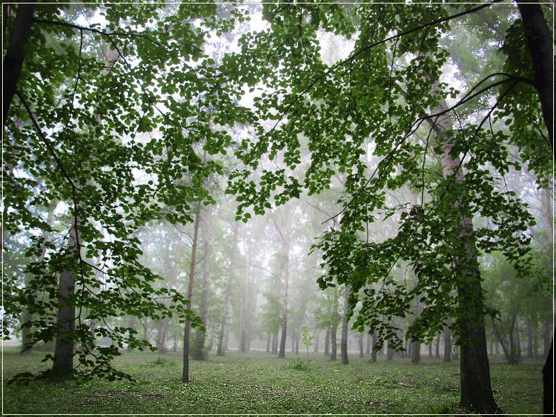 """фото """"туман"""" метки: пейзаж, лето"""