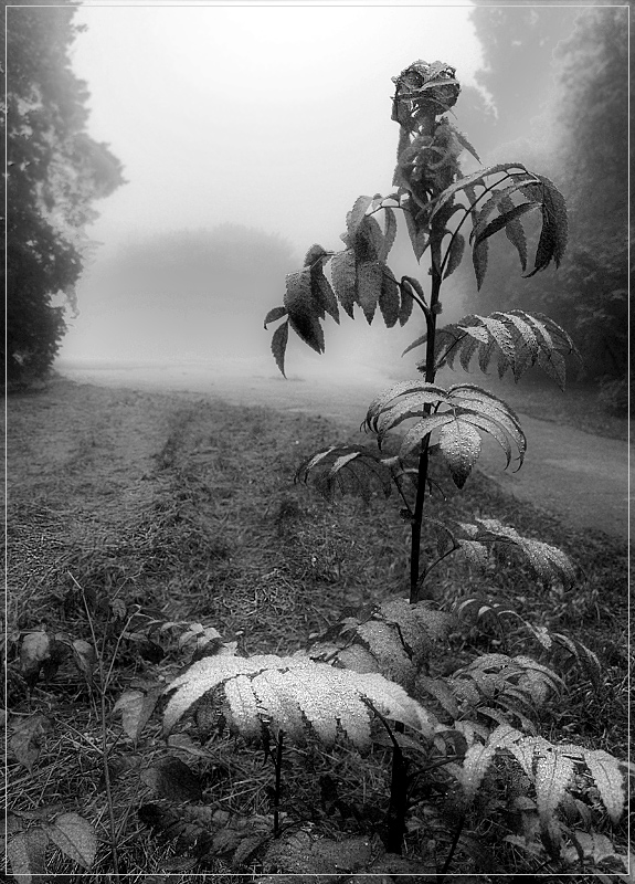 "photo ""fog 2"" tags: landscape, forest"