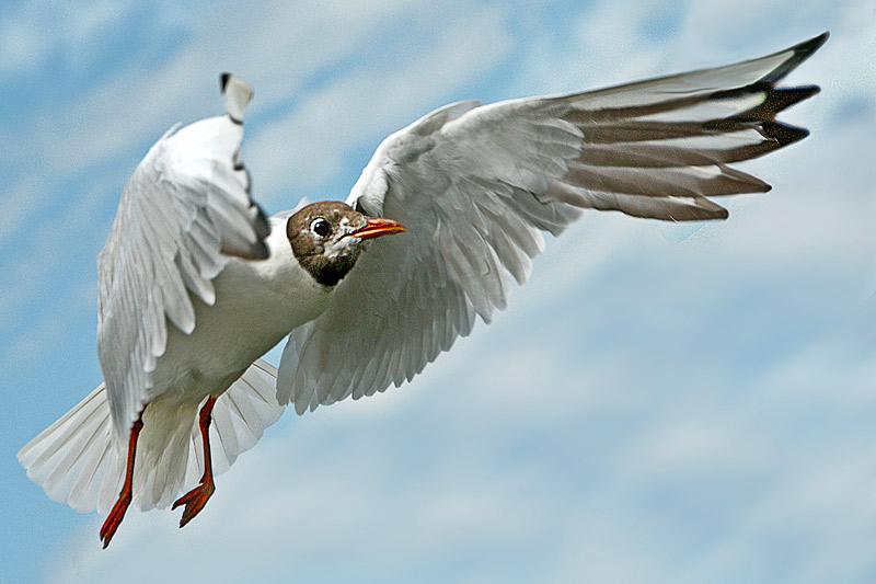 "фото ""In flight"" метки: природа, дикие животные"