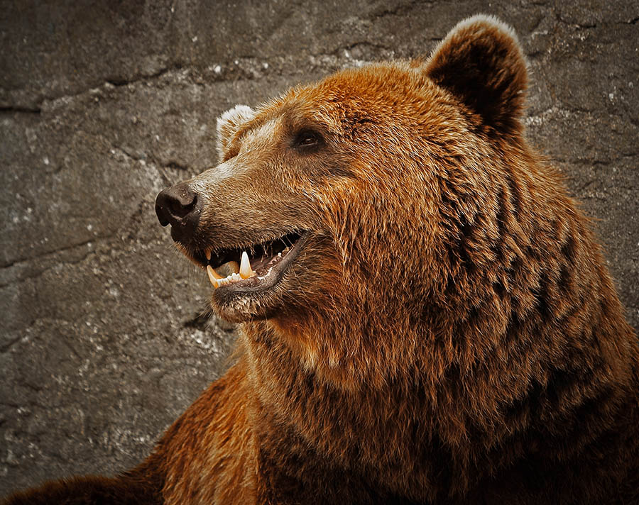 "photo ""Ursus arctos"" tags: nature, wild animals"
