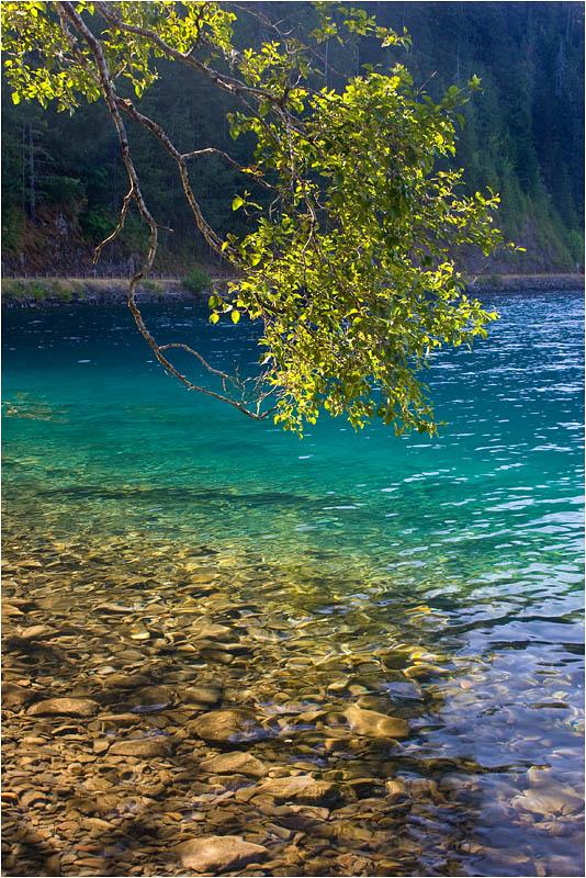 """фото """"Ветка"""" метки: пейзаж, природа, вода, цветы"""