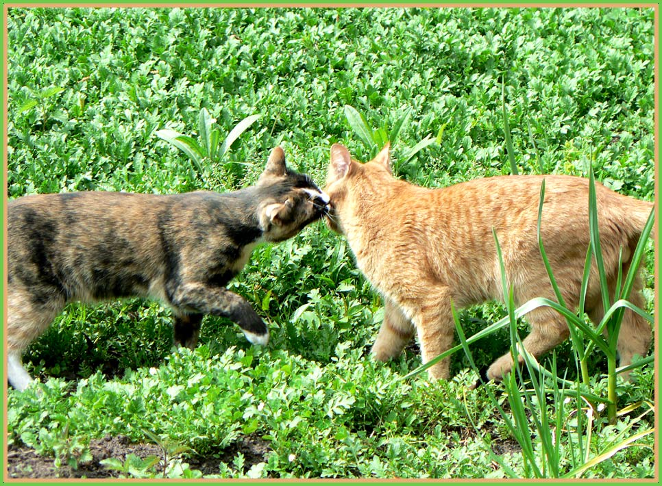 "photo ""cat's fondness"" tags: nature, genre, pets/farm animals"