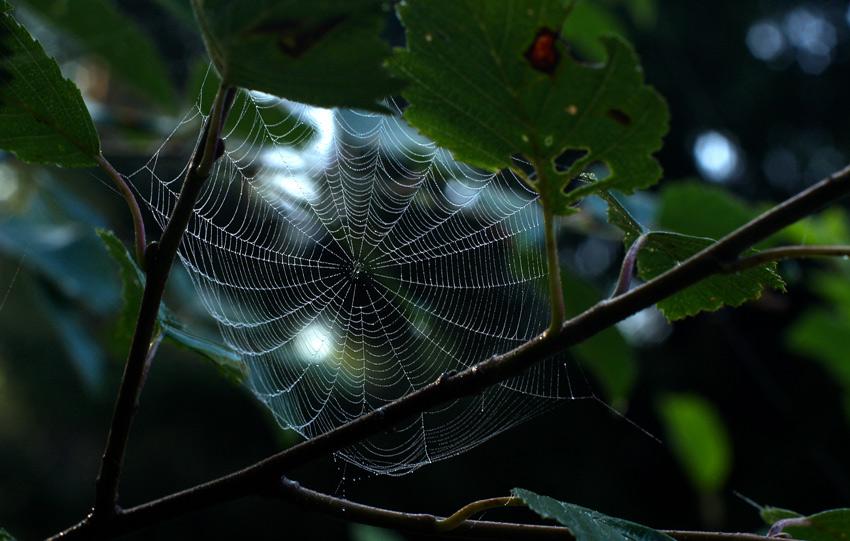 """фото """"Утро в лесу"""" метки: природа, насекомое"""