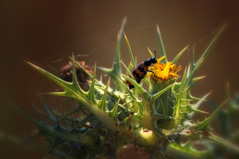 "photo ""***"" tags: nature, flowers, insect"