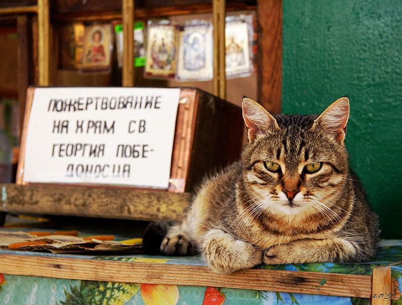 """фото """"а ты пожертвовал на храм?"""" метки: природа, домашние животные"""
