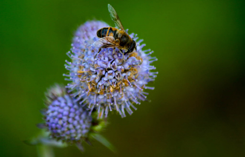 "photo ""The Bee"" tags: travel, nature, Europe, insect"