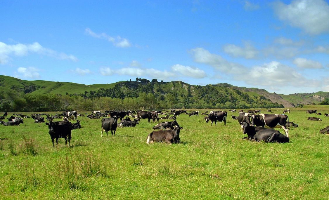 "photo ""Pastoral Scene.NZ."" tags: landscape, nature, pets/farm animals"