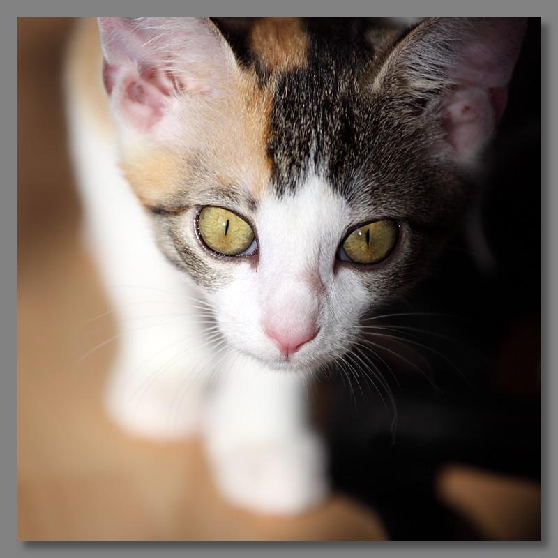 """фото """"Любознательный котенок"""" метки: природа, домашние животные"""
