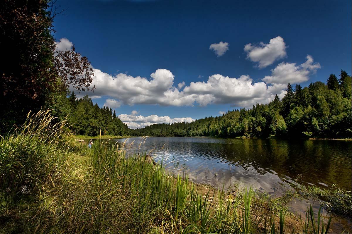 """фото """"Лесное озеро в полдень."""" метки: пейзаж, лето"""