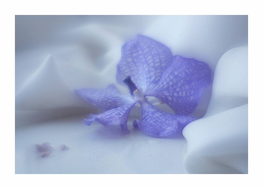 "photo ""Dreams of Blue Orchid"" tags: macro and close-up, still life,"