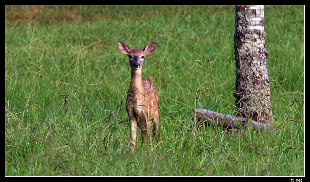 """фото """"Встреча II"""" метки: природа, дикие животные"""