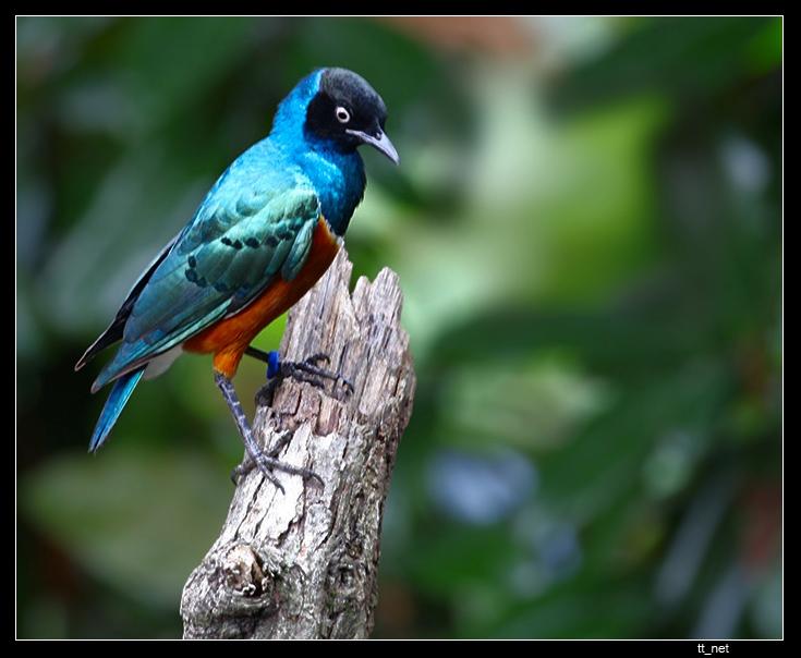 "photo ""The Bird"" tags: nature, wild animals"