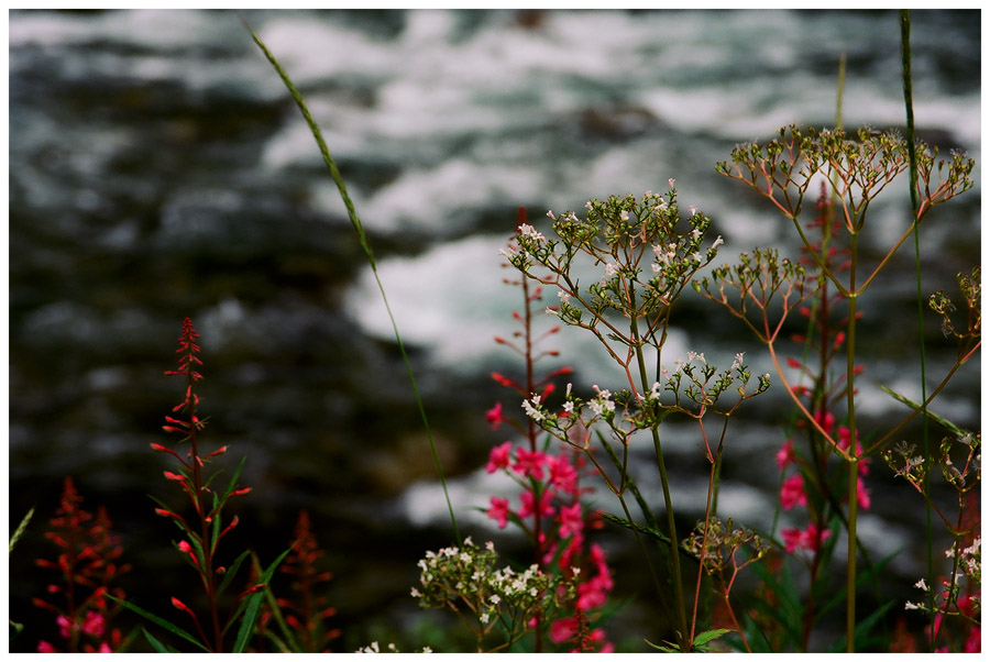 "photo ""Flowers at the waterfall"" tags: landscape, travel, Europe, summer"