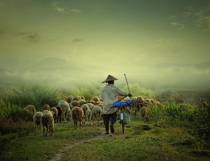 """photo """"Shepherd"""" tags: portrait, landscape,"""