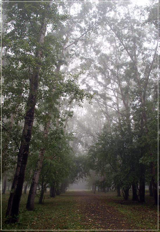 """фото """"туман 3"""" метки: пейзаж, лес, лето"""