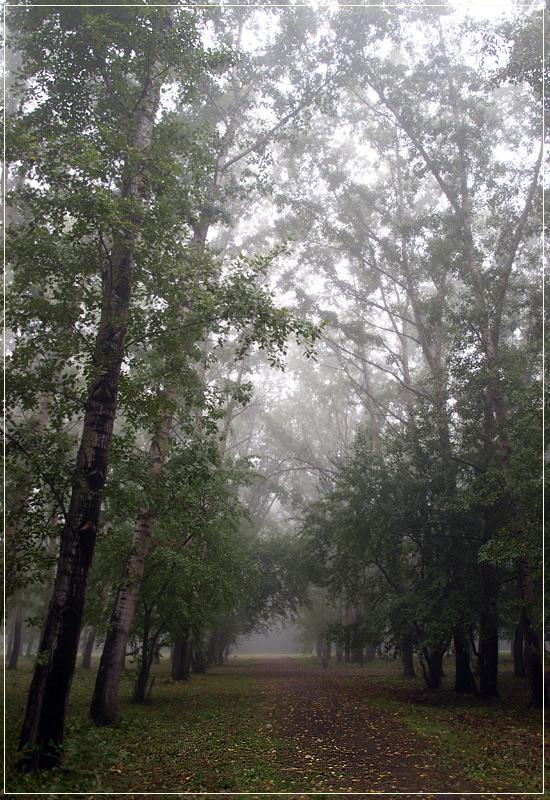 "photo ""fog 3"" tags: landscape, forest, summer"