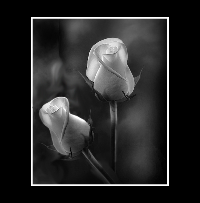 "photo ""==-"" tags: nature, black&white,"