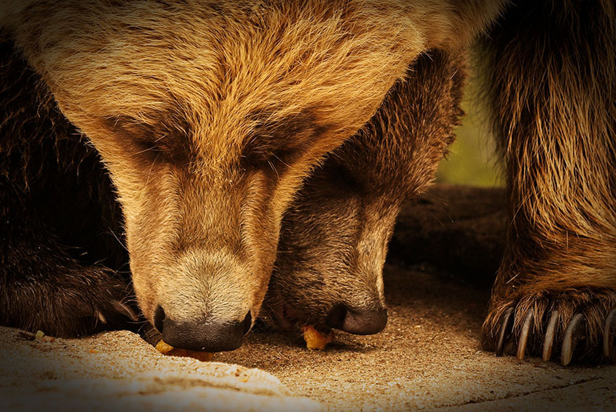 "фото ""sharing the goodies"" метки: природа, дикие животные"