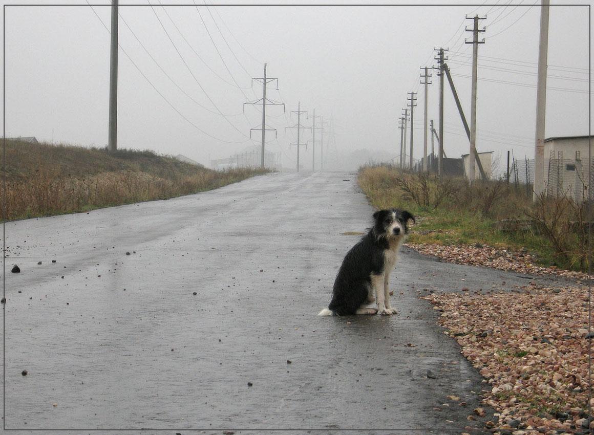 """фото """"Без семьи"""" метки: природа, домашние животные"""
