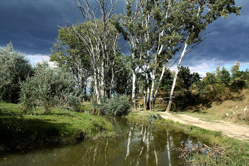"""фото """"Before the storm"""" метки: пейзаж, лес, лето"""