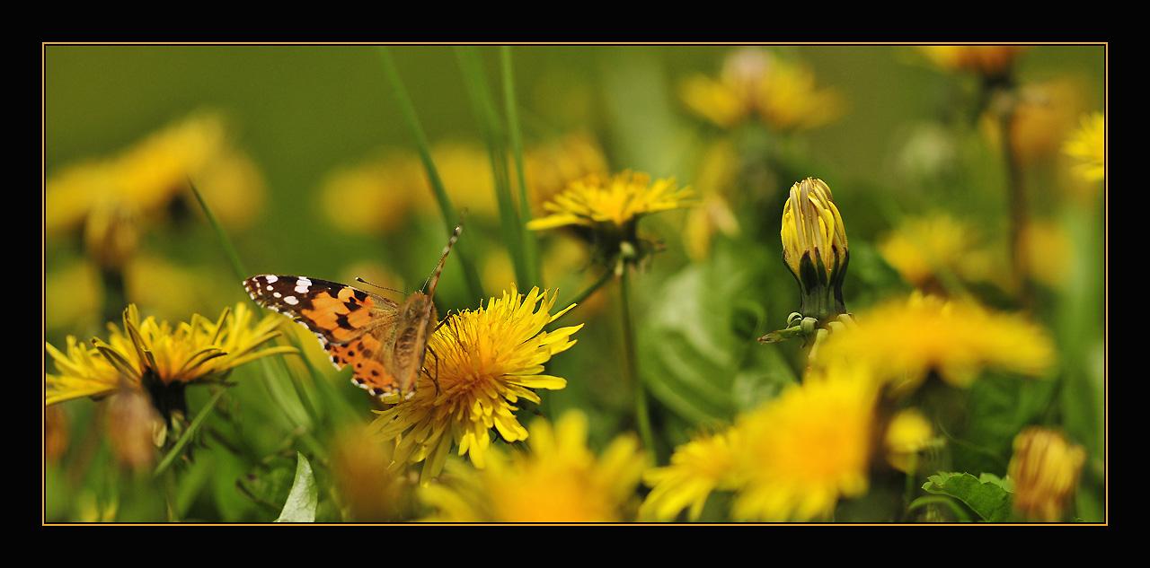 """фото """"MicroCosmos2"""" метки: природа, макро и крупный план, насекомое"""