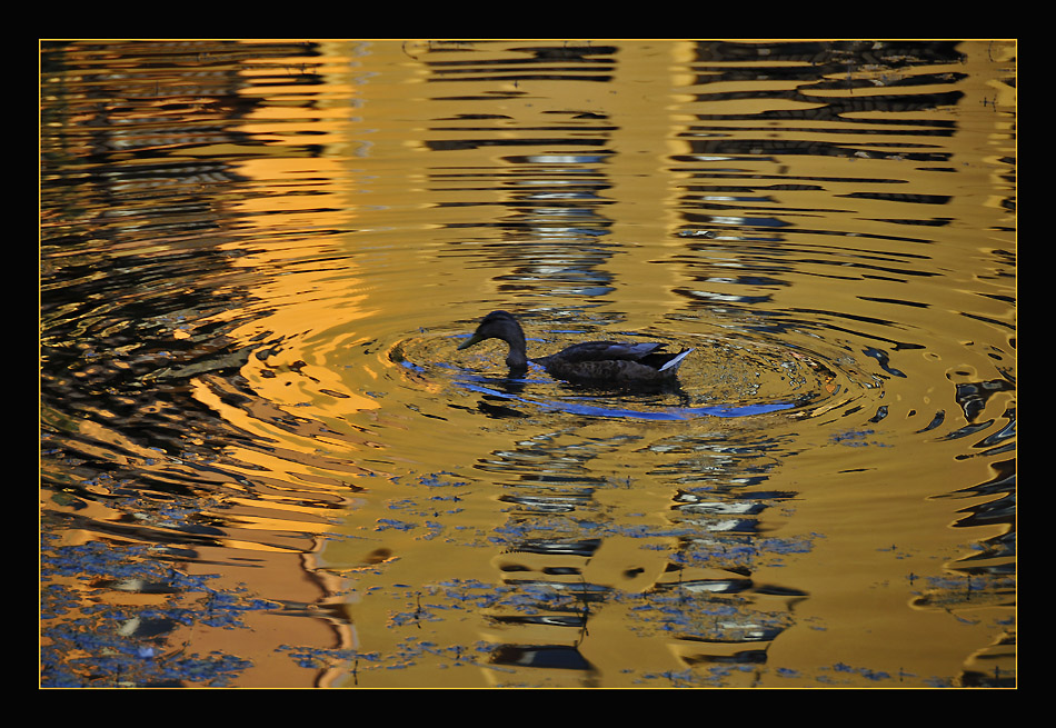 "photo ""Golden Water"" tags: landscape, nature, summer, wild animals"