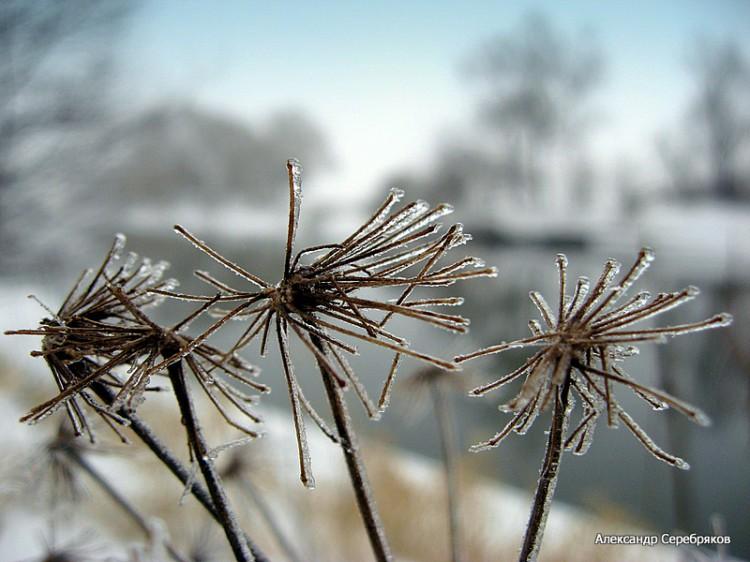 """фото """"Зарисовка..."""" метки: пейзаж, макро и крупный план, зима"""