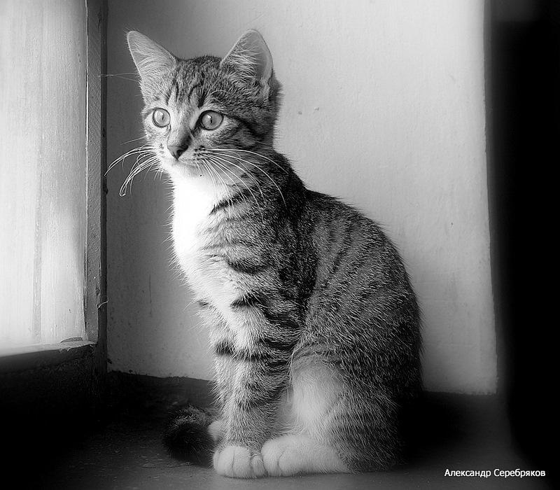 """фото """"Смышлёныш..."""" метки: природа, черно-белые, домашние животные"""