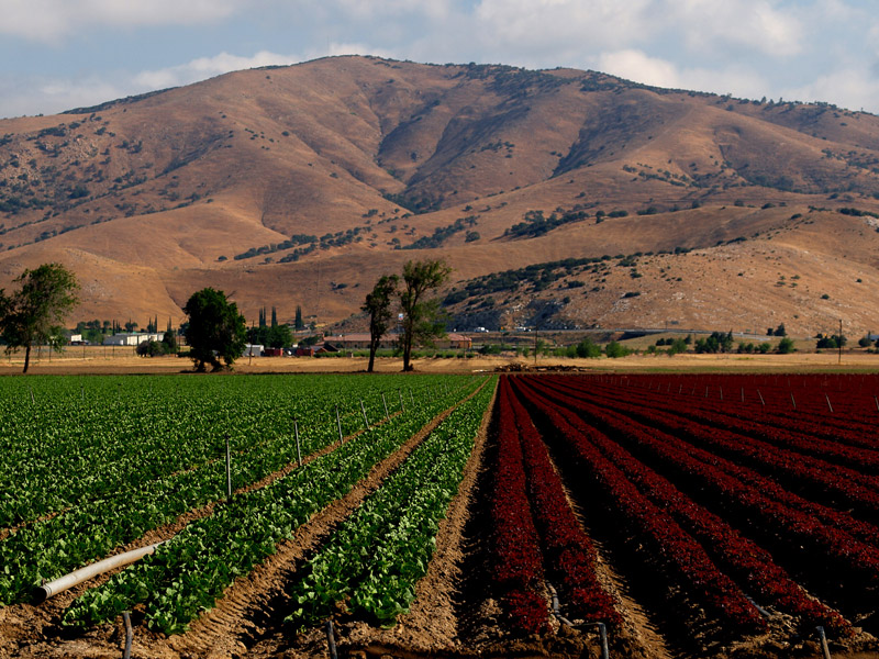 "photo ""Crops, 2 Colors"" tags: landscape, travel, North America"