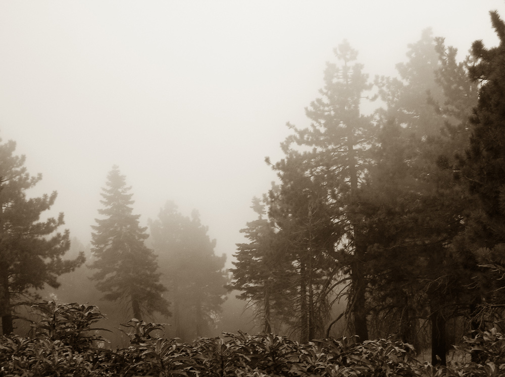 "photo ""Fog"" tags: landscape, travel, North America, forest"