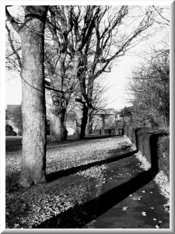 "photo ""alloa scotland"" tags: black&white, landscape, forest"