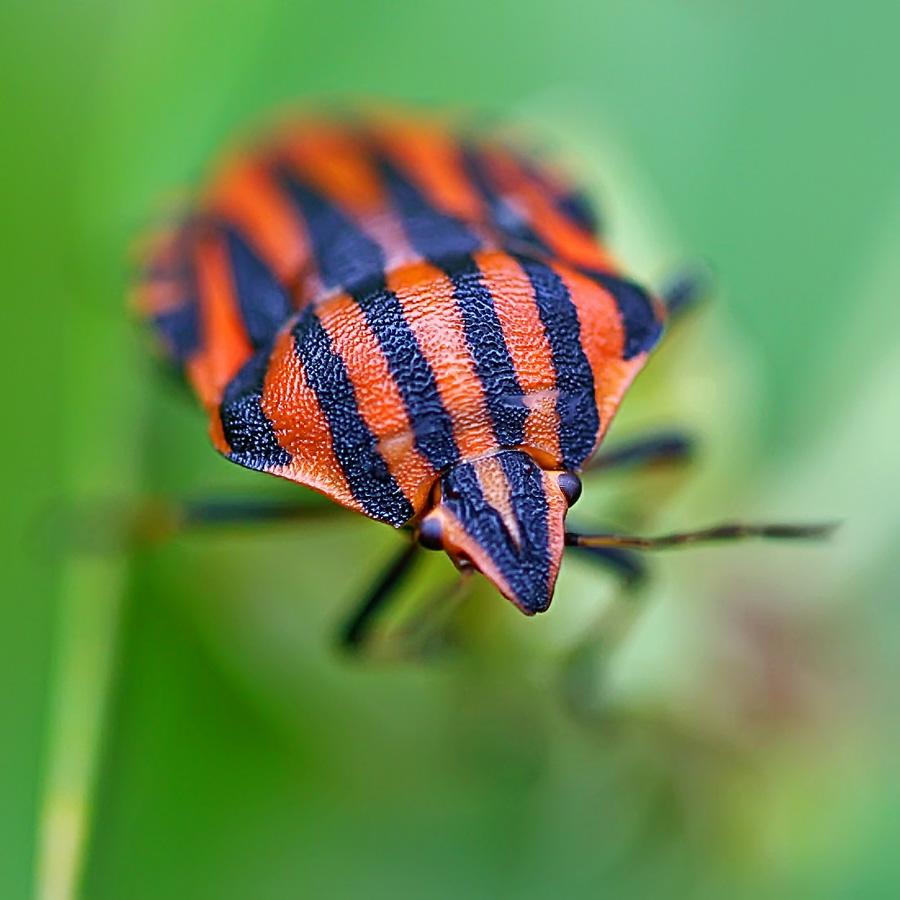 """фото """"Так можно и утонуть..."""" метки: природа, макро и крупный план, насекомое"""