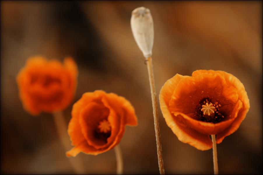 """фото """"**!*"""" метки: природа, цветы"""