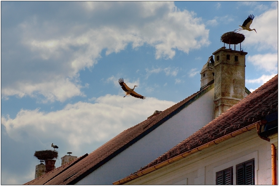 "photo ""Stork on a roof - the peace on the Earth"" tags: genre, travel, Europe"