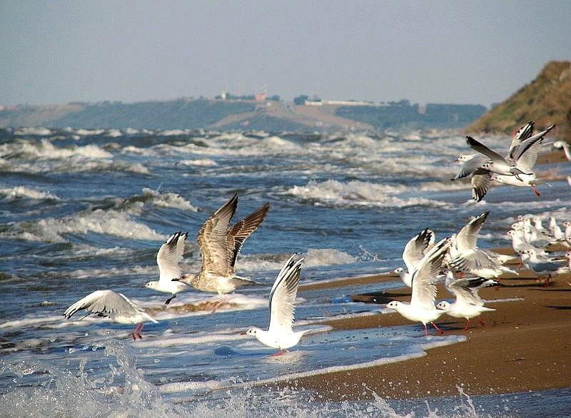 """фото """"Азовское море..."""" метки: пейзаж, природа, вода"""
