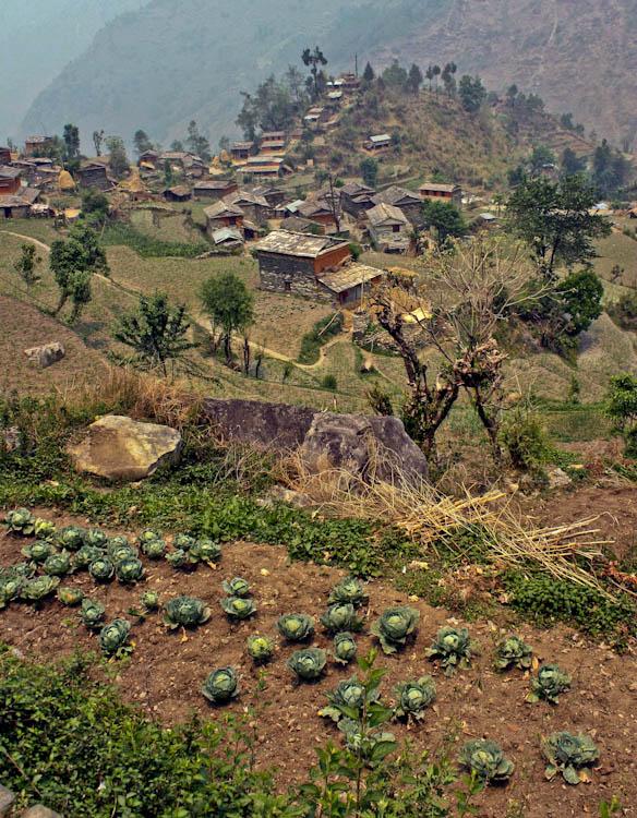 """фото """"Капуста в Гималаях"""" метки: пейзаж, горы"""