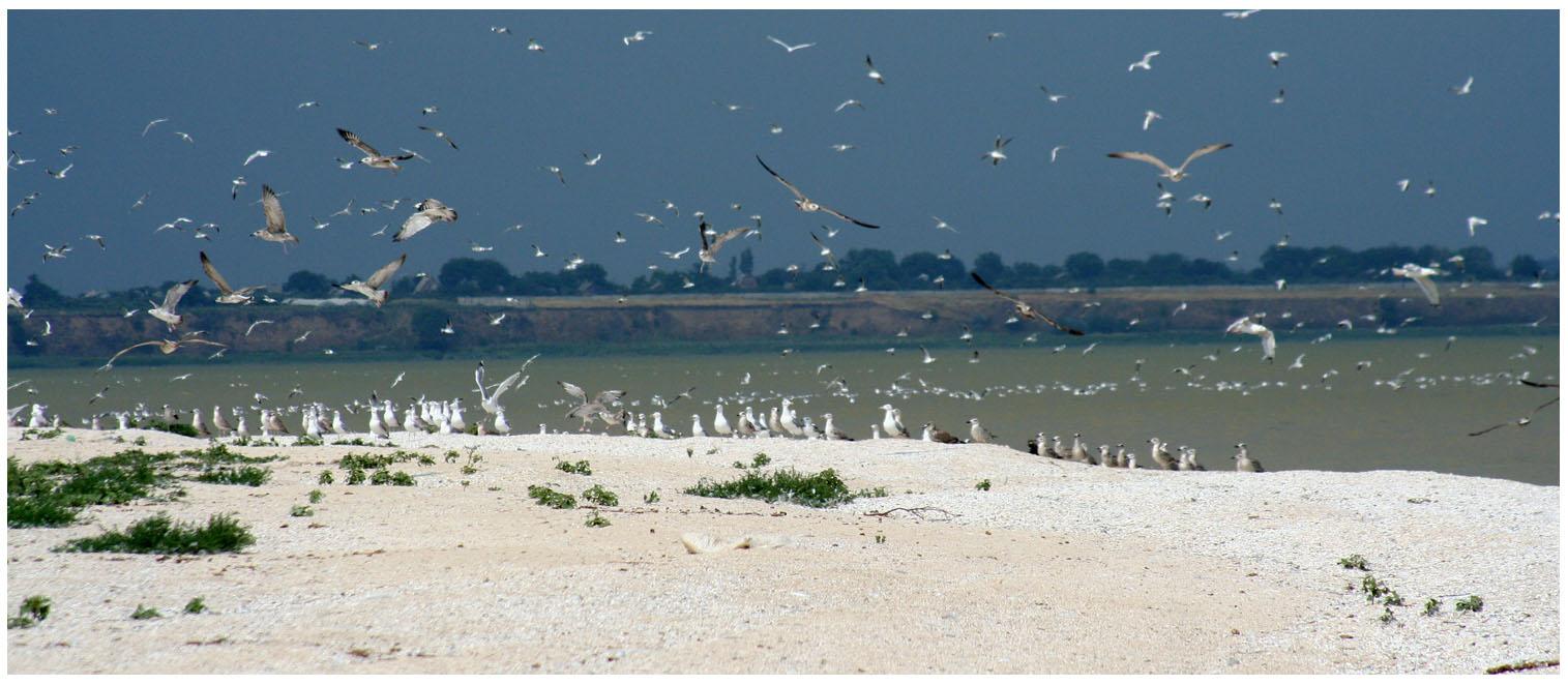 """фото """"Азовское море."""" метки: пейзаж, природа, вода"""