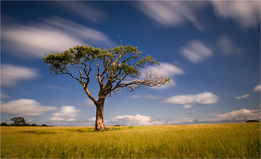 "photo ""Irish Savannah"" tags: landscape,"
