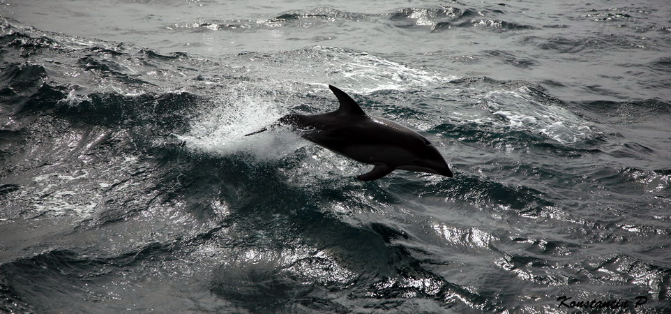 """фото """"Полет"""" метки: природа, дикие животные"""