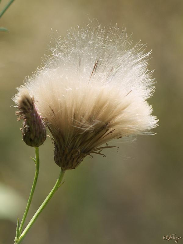 """фото """"Полуденный взрыв"""" метки: природа, макро и крупный план, цветы"""