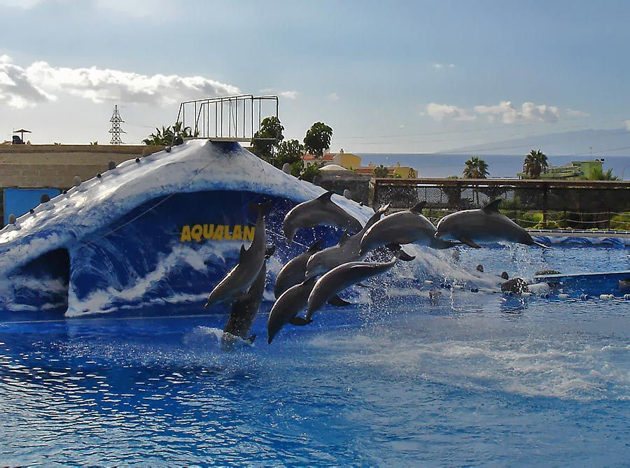 "photo ""Dolphins"" tags: nature, travel, Europe, wild animals"