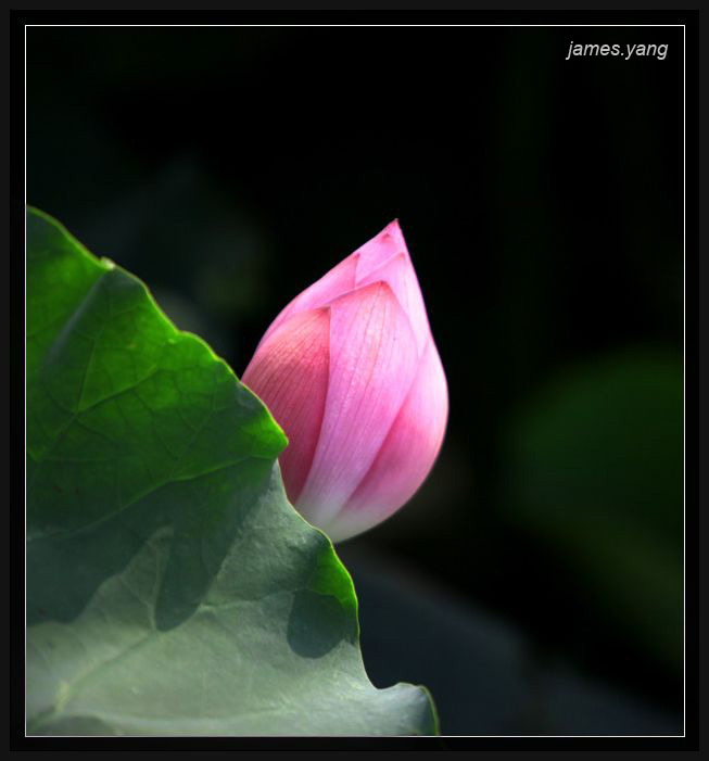 "photo ""water lily"" tags: nature, flowers"