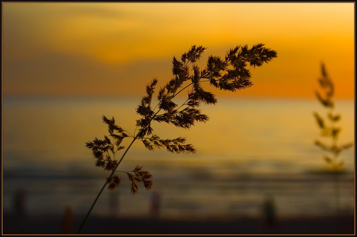 """фото """"Травинка на ветру..."""" метки: природа, разное, цветы"""