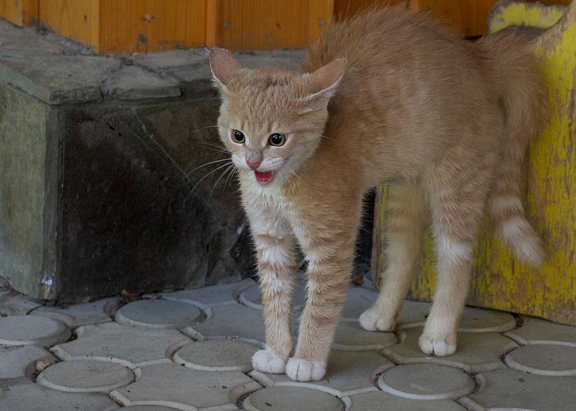 """фото """"Страшнее кошки зверя нет..."""" метки: природа, домашние животные"""