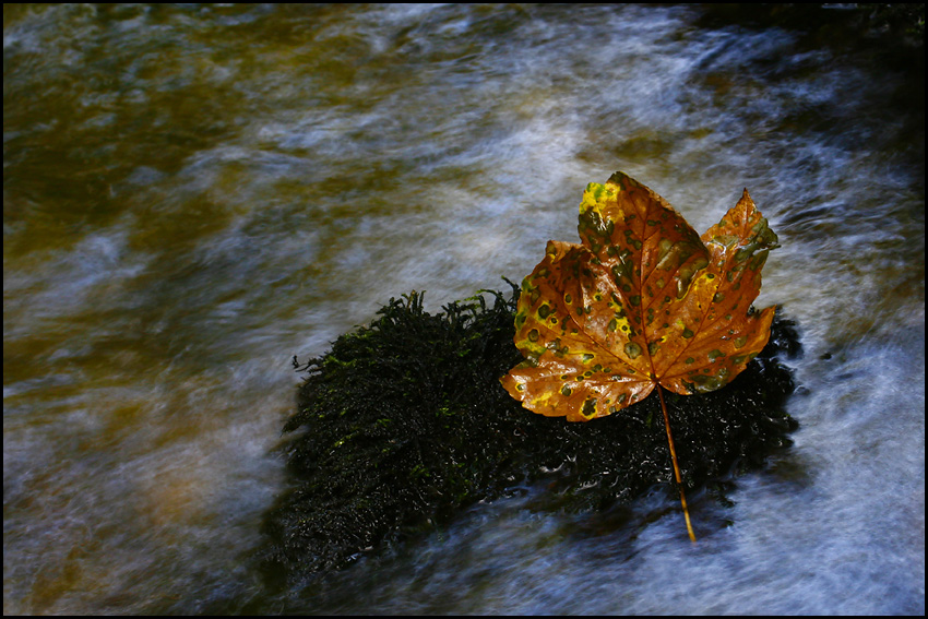 "фото ""Fall Impresions I"" метки: пейзаж, натюрморт, осень"