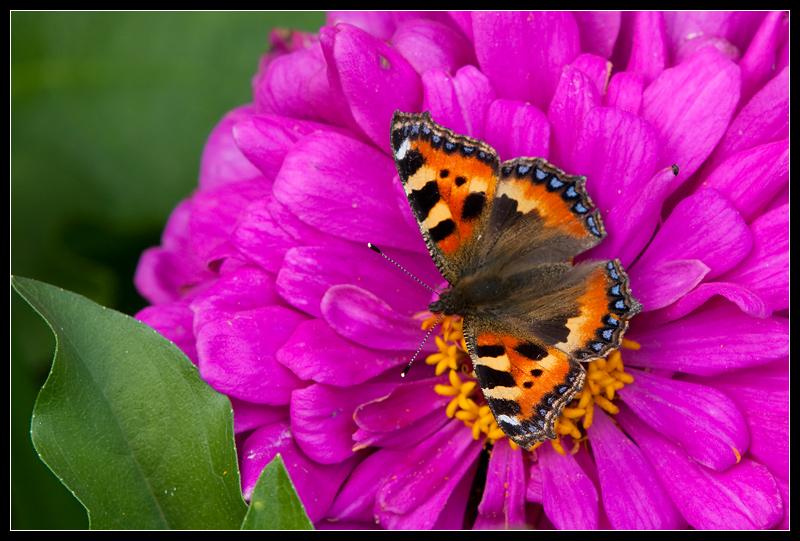 """фото """"Летняя пора"""" метки: природа, насекомое, цветы"""